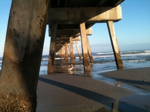 Pelican under Jax Beach Pier