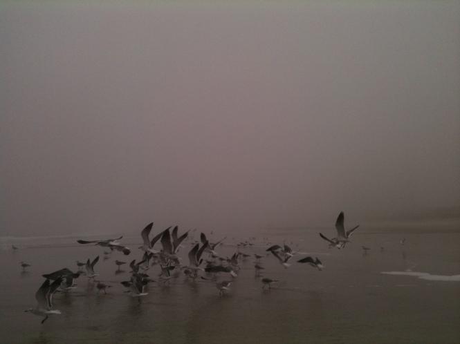 Gulls in fog